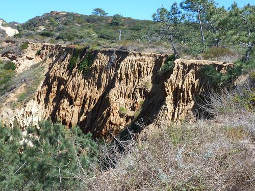 CA - SD 3-20-12 Torrey Pines 015