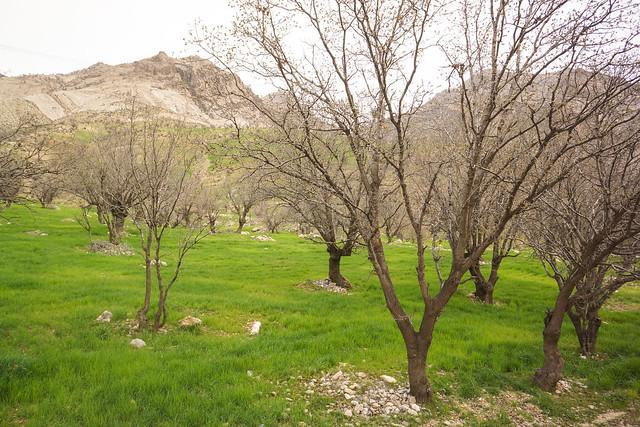 Springtime greenery in Khuzestan