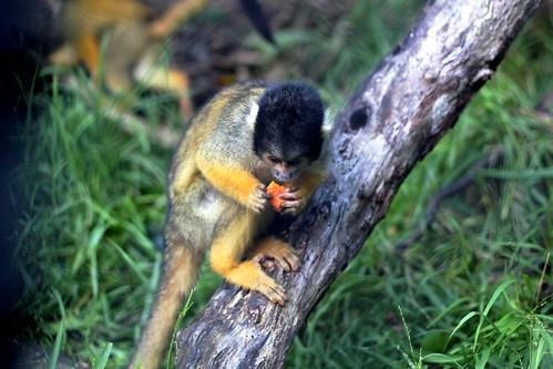 Teeny tiny monkeys