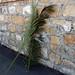 palmegrene