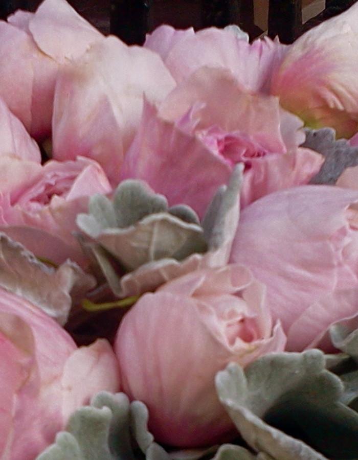 rosalind-4_2