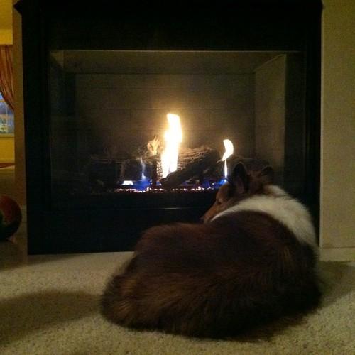 Bailey likes fire