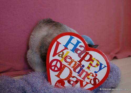 chun 2-12-2012 1-16-04 PM