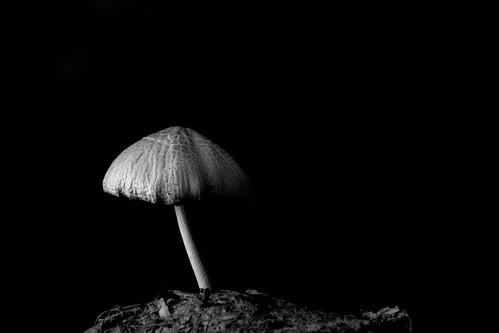 Mushroom - காளான் by Varnajaalam @ Rajanna