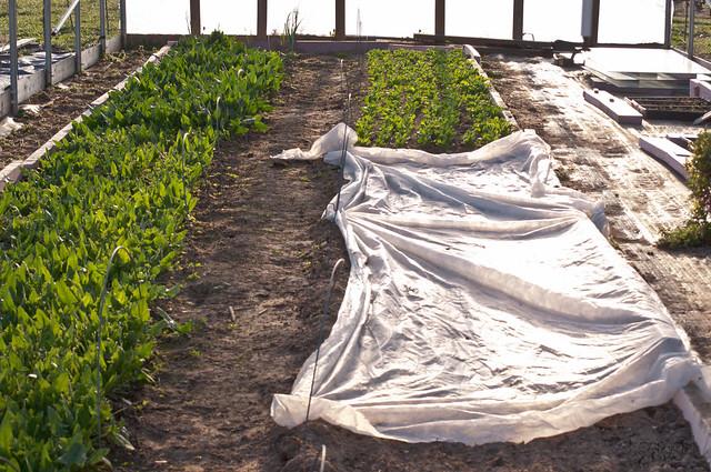 farmgirl-0302.jpg