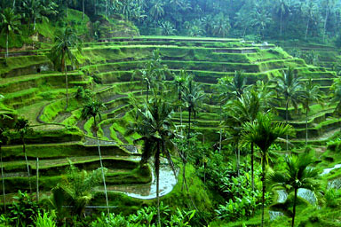 ubud-rice-terrace01