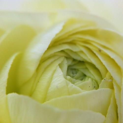 Flower from Santana Row