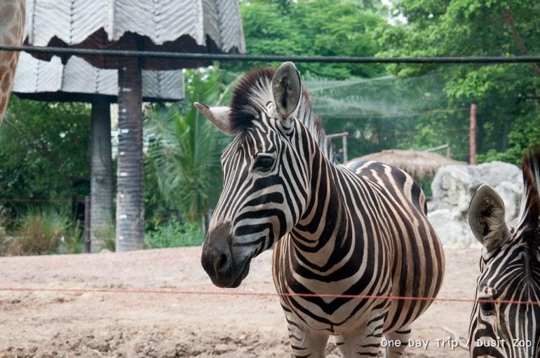 Dusit Zoo | สวนสัตว์ดุสิต