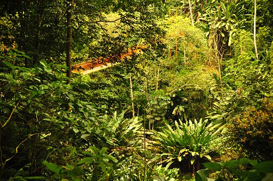 6979849159_4203f3d66d_o Jardin Botánico del Quindío - Armenia, Colombia Colombia Zona Cafetera  Zona Cafetera Quindio Nature Mariposario Guadua Garden Colombia Butterfly Botanical Bamboo
