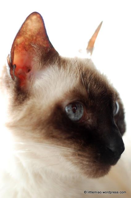 tashi 3-17-2012 3-10-40 PM