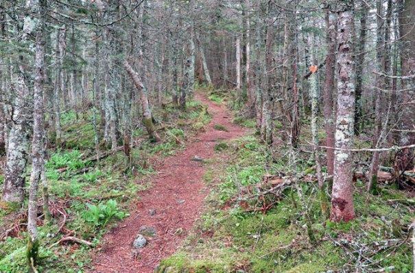 Mt. Tecumseh Trail Tripoli Softwoods