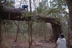 Adam on the Fallen Tree