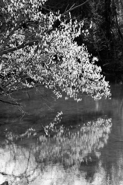 Branch Reflection