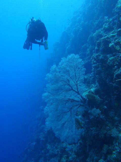 Wakatobi: Pristine Coral (4/6)