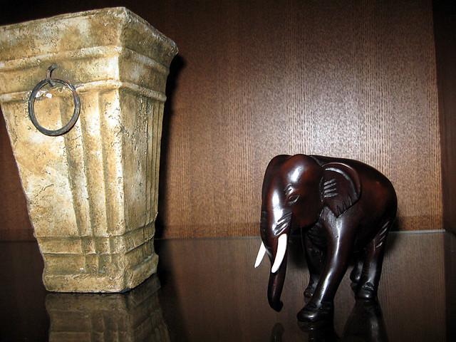 ann-elephant