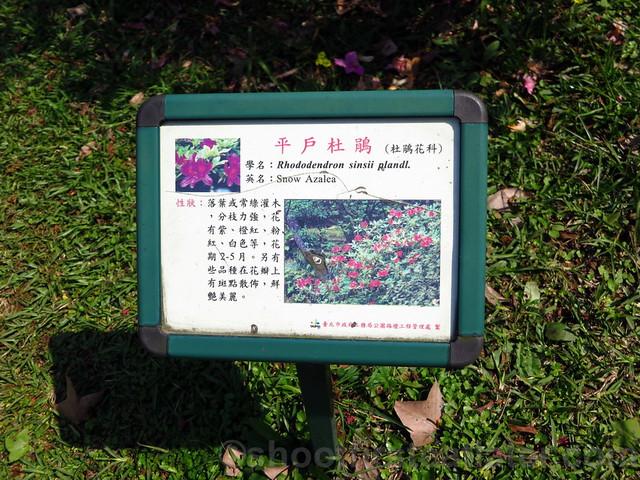 Yang Ming Shan-014