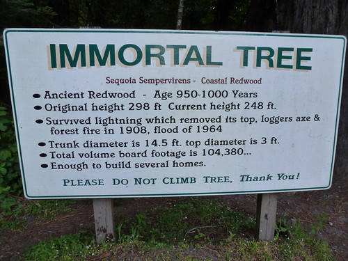 5-18-12 CA 50 - Avenue of the Giants, Immortal Tree Sign