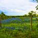 JVP_20120413_BluebonnetTrail6905