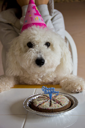 Teddy's Birthday