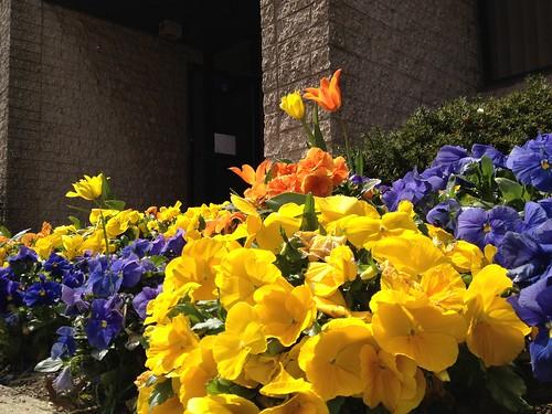 Spring by damn_que_mala