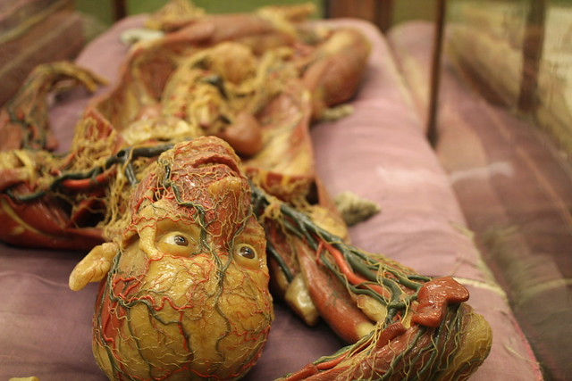 Saturday: Wax medical models from the 1800s