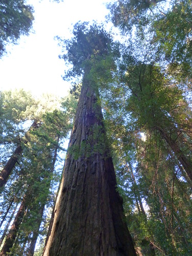 5-18-12 CA 37 - Avenue of the Giants