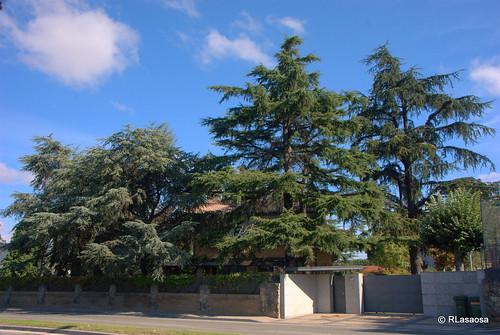 Una vivienda unifamilar escondida tras los árboles en la carretera de Badostáin