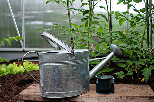 Favorite Watering Can