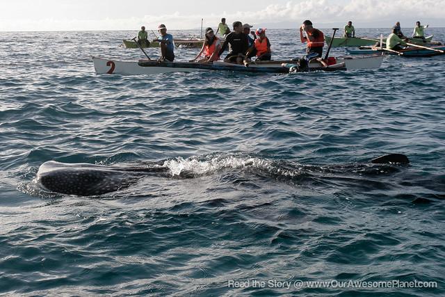 Oslob Whale Watching-13.jpg