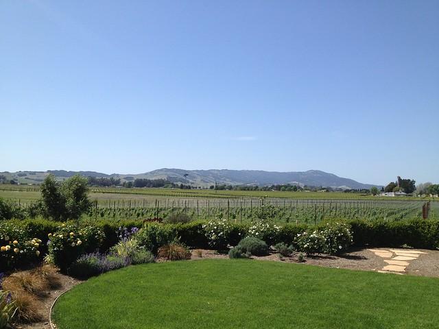 Backyard, Anaba Wines
