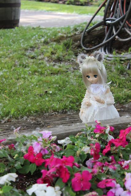 Curious little kitsune