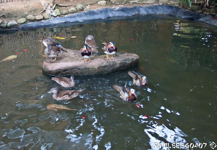 20120407 2012.04.06 Bird Paradise & Wildlfe Park @ Langkawi-16