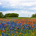 JVP_20120413_BluebonnetTrail7049