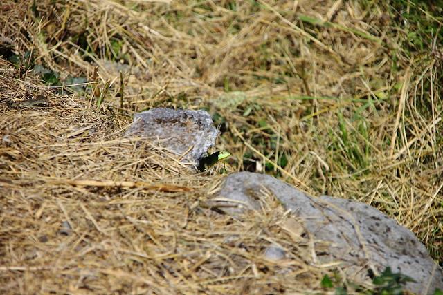 Busca el lagarto verde #Photography  #Foto 16