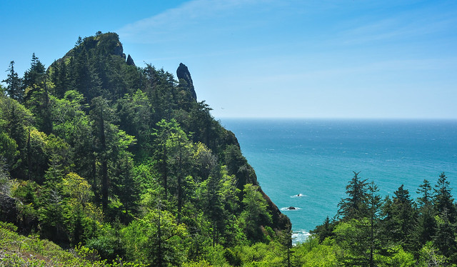 Southern Oregon coastal vegetations