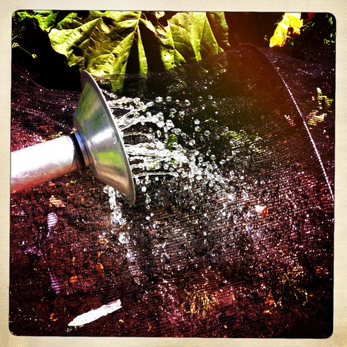 365:146 Watering