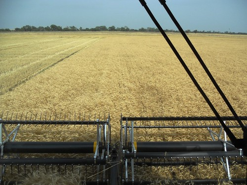 From inside the combine cab