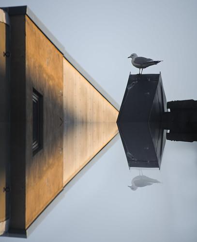 Seagull x2 by annenesteby