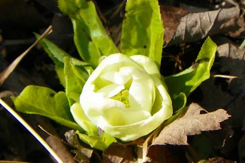 flower4