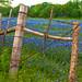 JVP_20120413_BluebonnetTrail6936