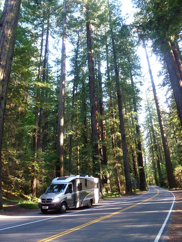5-18-12 CA 40 - Avenue of the Giants