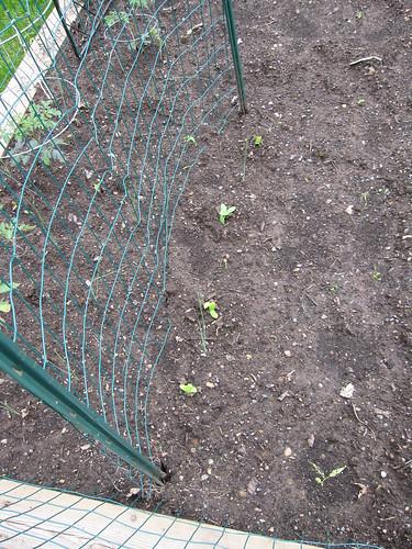 GardenWeek2 #2
