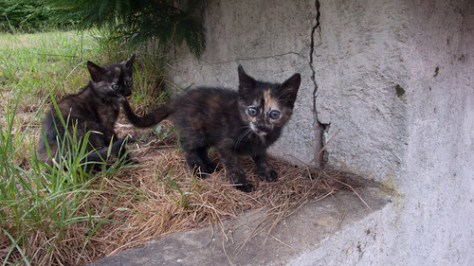 French kittens