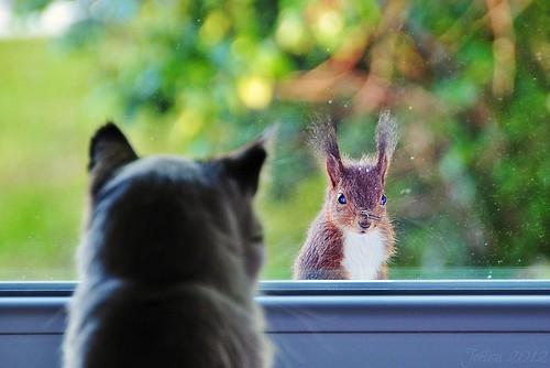~~Thomas et l'écureuil...!~~