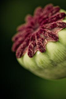 flower detail 3