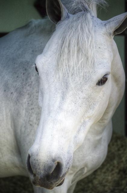 Queen of Ponies