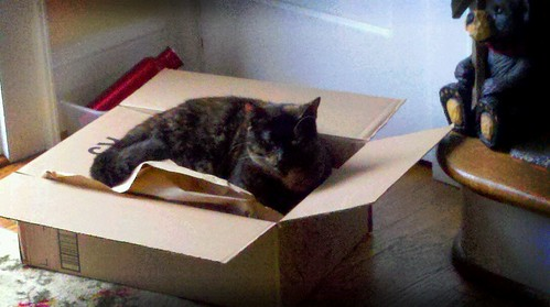 Cat Trap by MinGrange