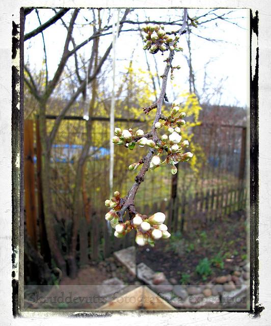Blommor snart