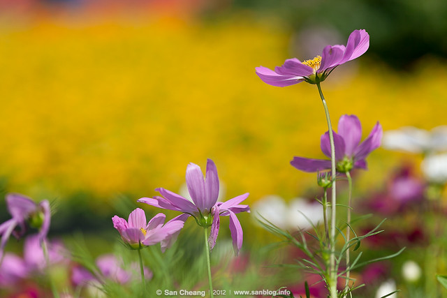 flower_Tapseac-0217