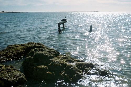 2008.LagunaSanIgnacio.Baja.3